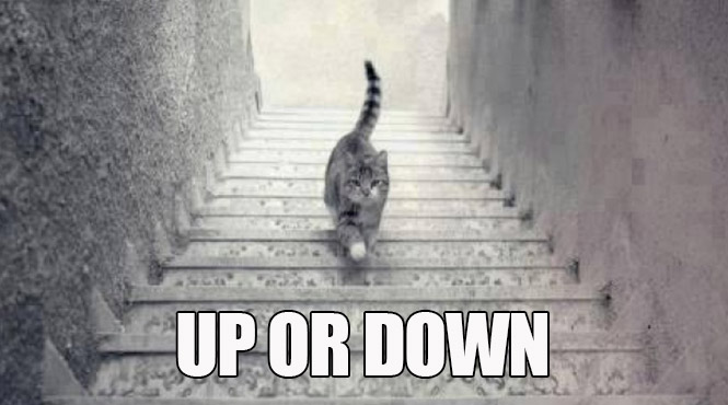The Internet Can't Decide If This Cat Is Going Up Or Down ...