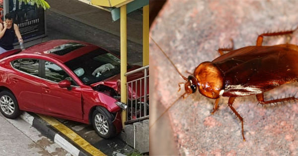 A Cockroach Is The Reason This Woman Crashed Her Car Into ...
