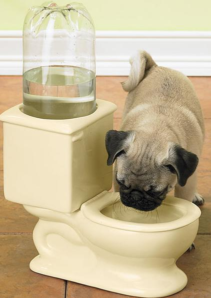 You should be careful of your furry companion's food and water bowl – make sure that the contents are clean and free from any dust particles or pollutants. Change water bowls frequently.
