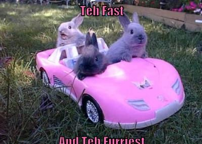 The Fast and the Furriest meme.