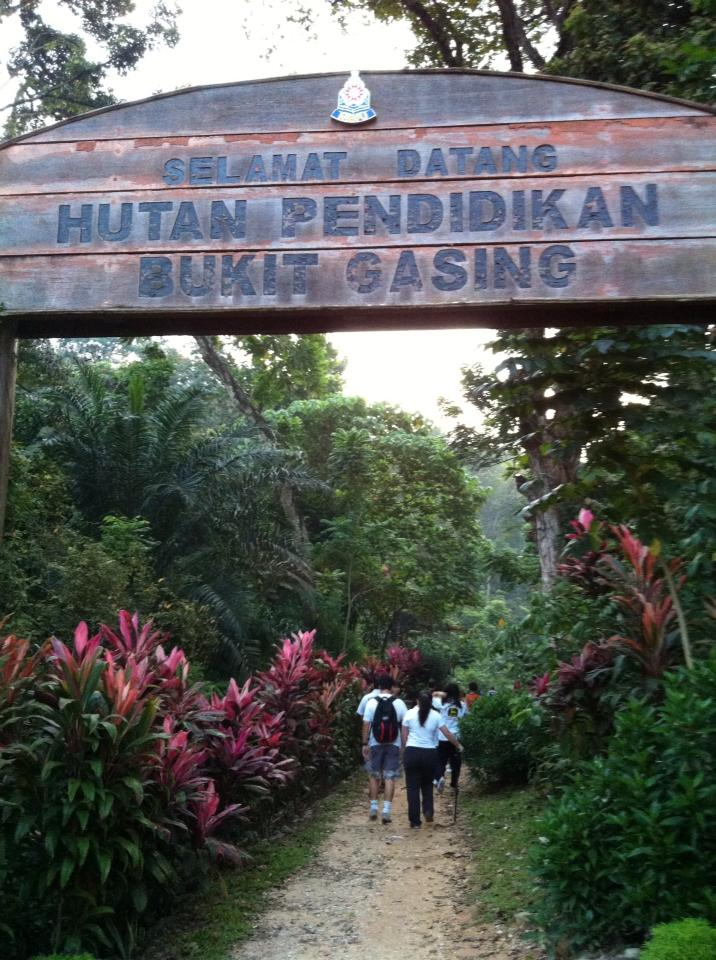 Bukit Gasing trail general picture.