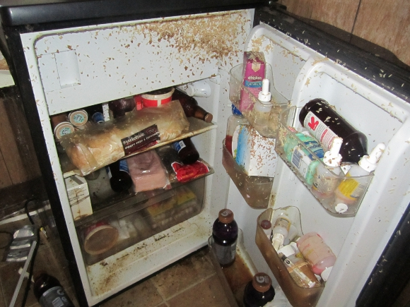 An illustration of a maggot-infested refrigerator, photo from Peta.