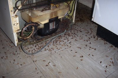 A cockroach-infested area behind and under the refrigerator.