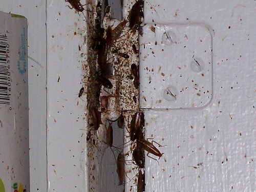 Image of cockroach-infested fridge.