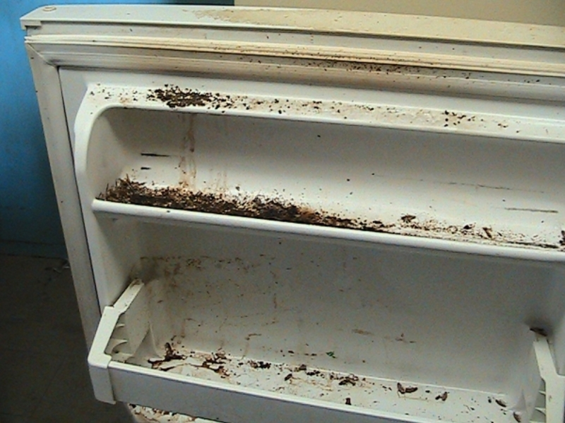 An illustration of a maggot-infested refrigerator.