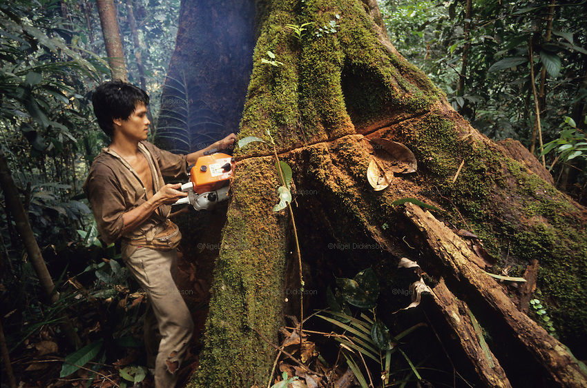 issues of deforestation in malaysia In this article we investigate the causes and effects of deforestation, and look at   rainforests in indonesia and malaysia have been particularly.