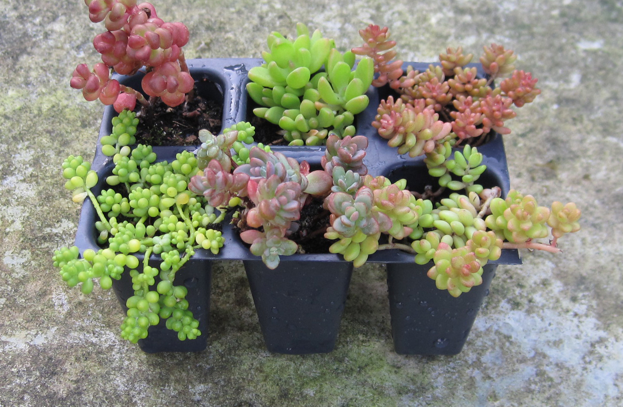 Image from simplysucculents.com