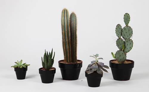 Cacti and other mini plants - probably not the best Christmas gift.