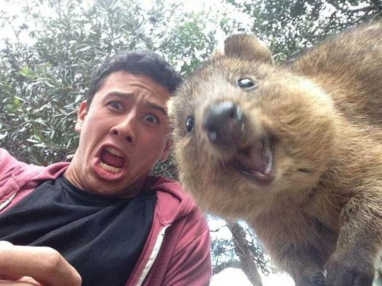 Quokka wants to be your friend