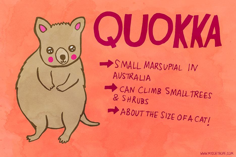 Quokka facts