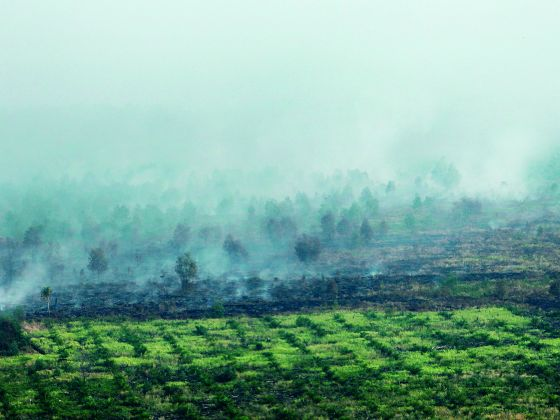 Riau, the centre of the world's largest palm oil industry, experiences thousands of fires each dry season as farmers clear land to make way for agricultural expansion.