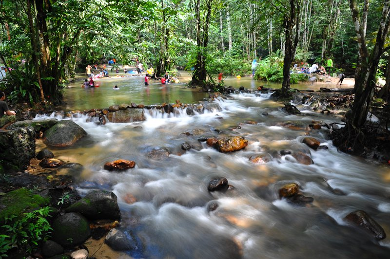 The Selangor State Park is an important water catchment forest