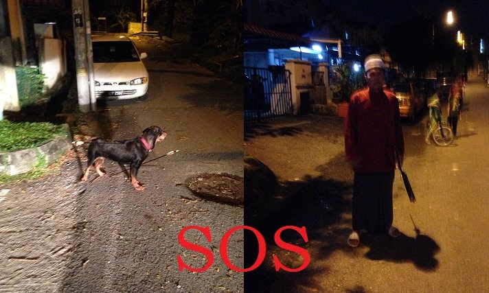 Image from Malaysian Dogs Deserve Better