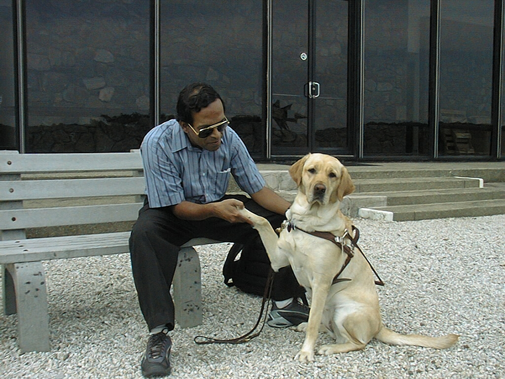 Labradors are suitable to be guide dogs