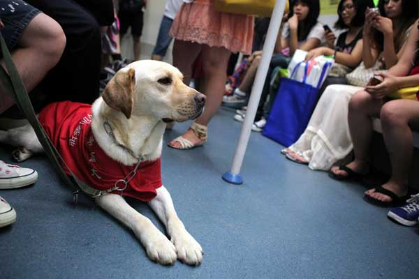 The SPAD has stated that guide dogs can ride on public transport.