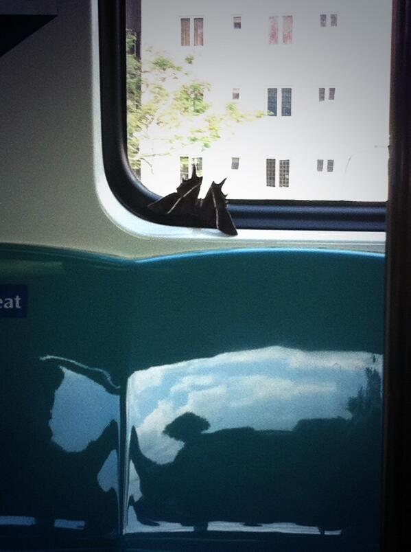"""""""There's a moth in the train"""""""