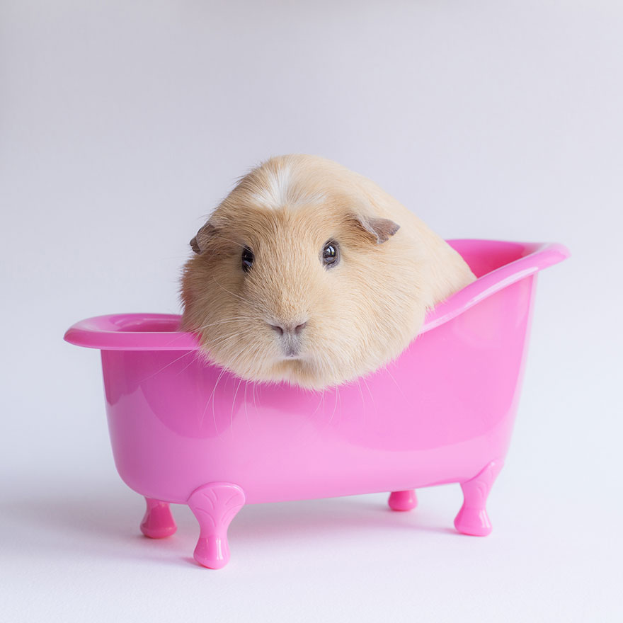 Booboo lounging in a Barbie-pink bath tub, by Lieveheerbeestje.