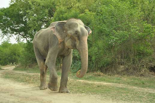 Raju was finally freed from half a century of captivity
