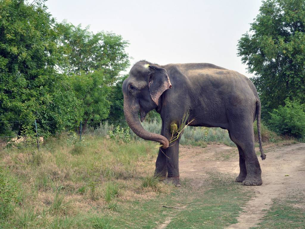Raju is roaming free for the first time at the sanctuary