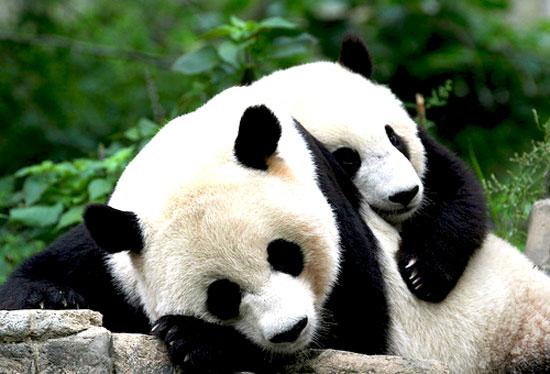 Image from animals-pics.com