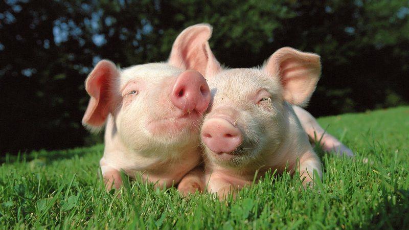Image from nice-animals.com