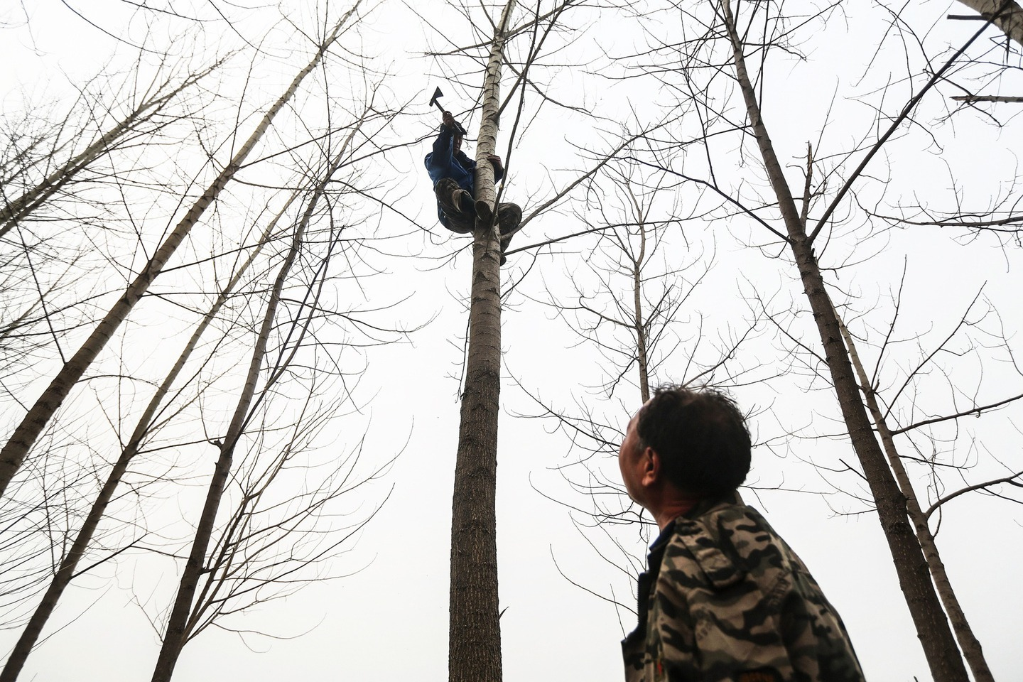 Jia Wenqi watches as Jia Haixia chops branches from a tree.