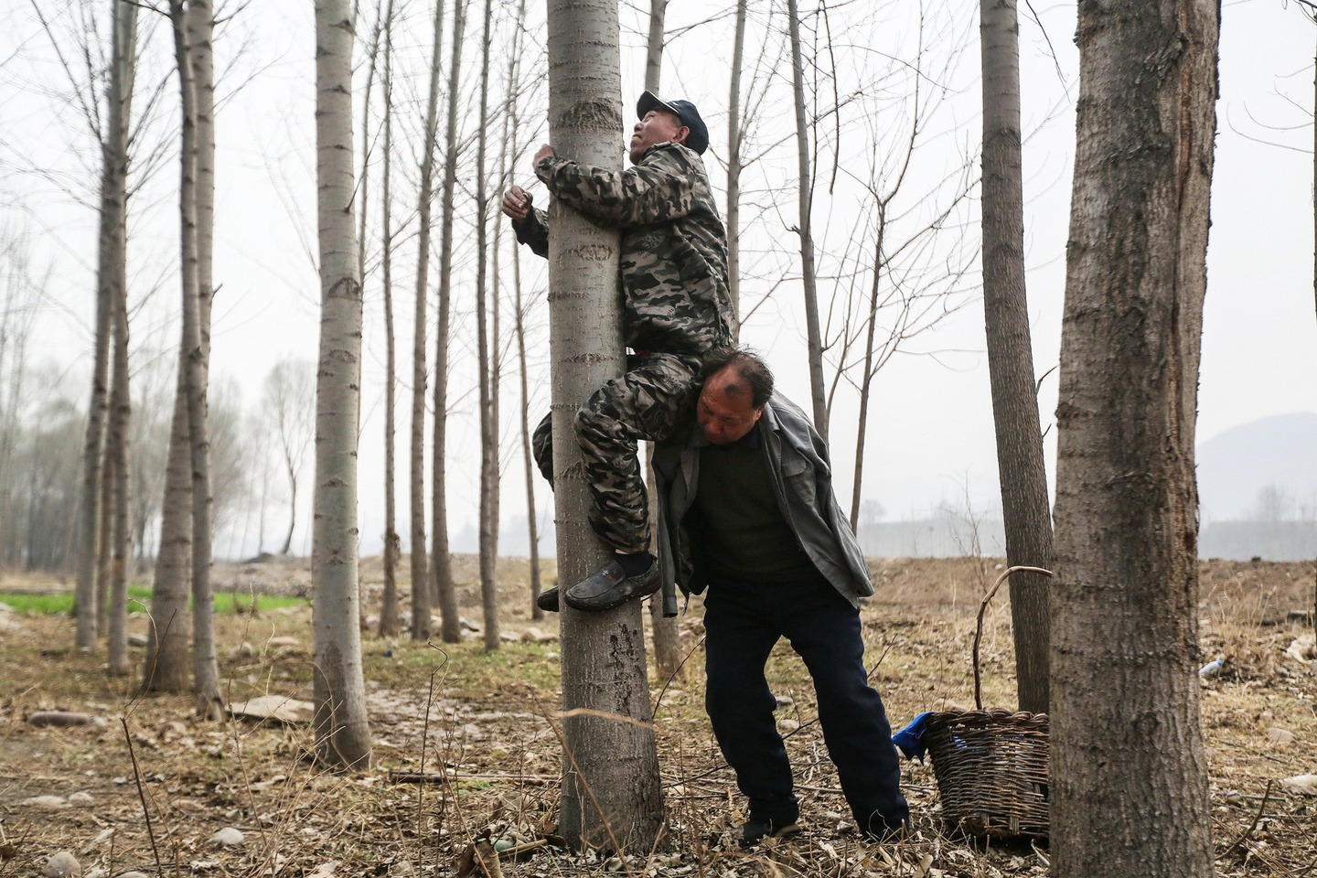 Jia Wenqi uses his shoulder to help his blind friend Jia Haixia climb a tree they planted, to hew branches in Yeli village.