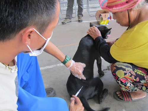 A health worker vaccinating a pet dog.