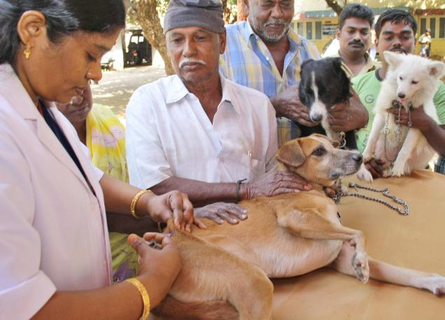 A doctor administers anti-rabies vaccine to a dog at the Veterinary Hospital in Coimbatore.