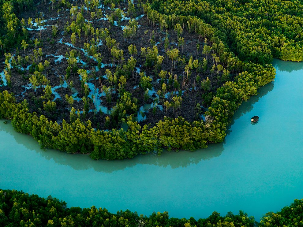 An aerial shot of a mangrove swamp in Johor photographed by Justin Guariglia