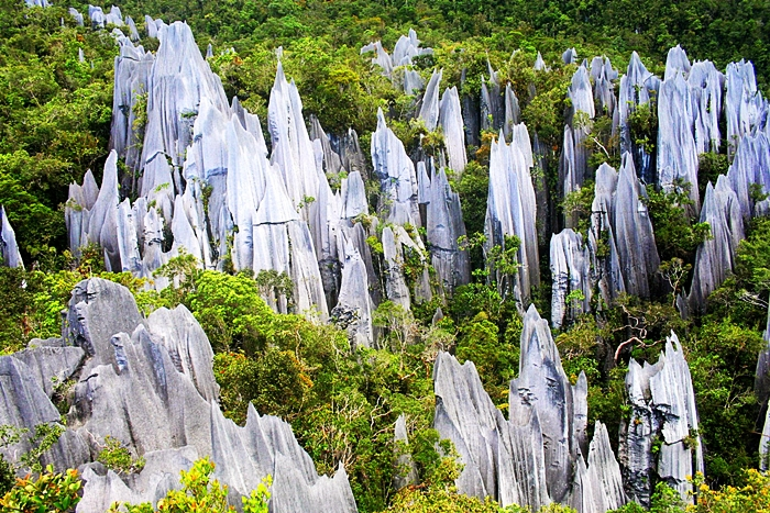Image from Borneo Tropical Adventures