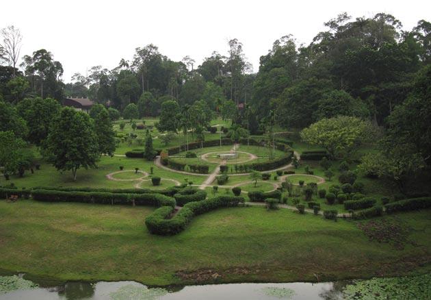 Image from Rainforestjournal