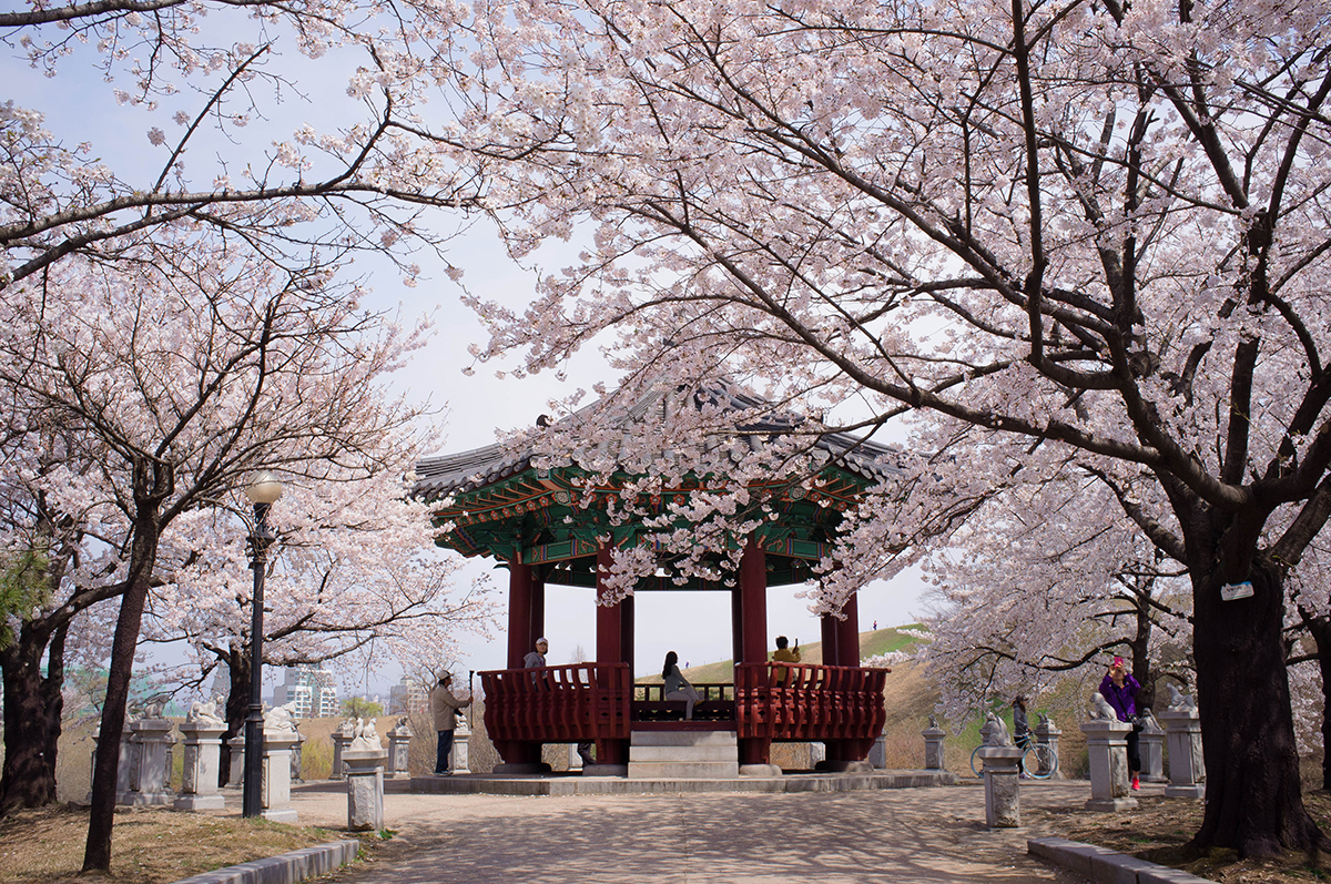 Spring Is Probably The Most Unforgettable Time To Visit Korea