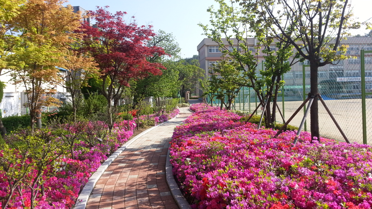 The Most Magical Spring Vacation In Busan