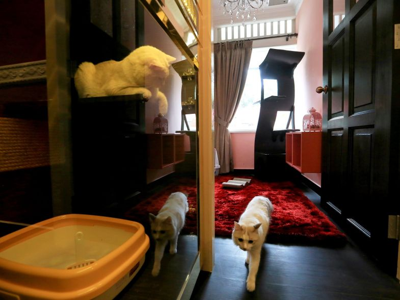 A cat walking out from The Imperial Feline Suite while the other cat from the Cabin Feline Suites look on.