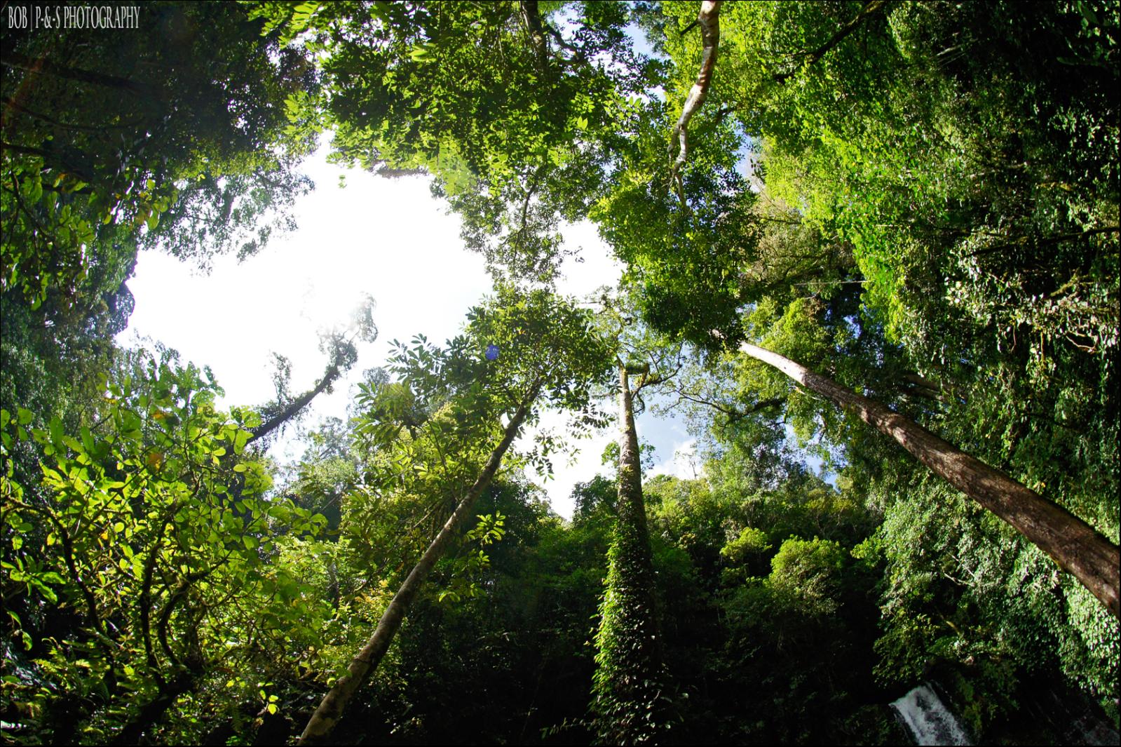 Tambunan, Sabah