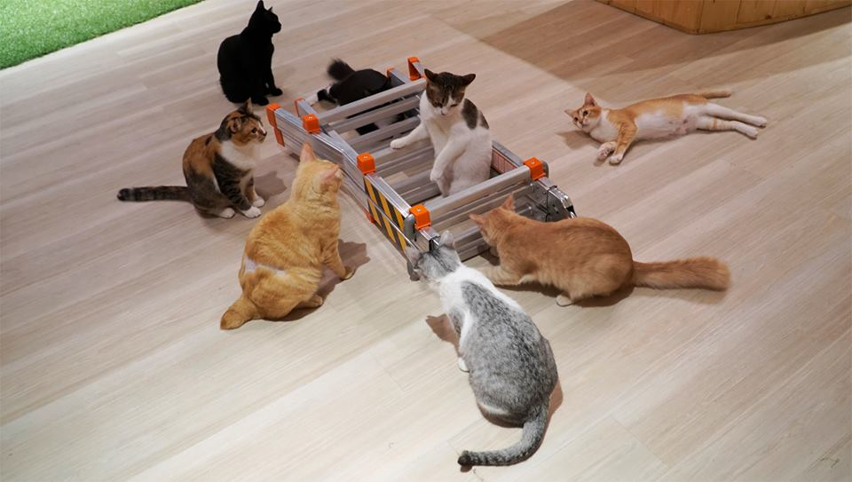 Image from Purradise Cat Cafe TTDI/Facebook