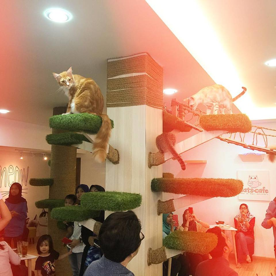 Image from CATS Cafe JB - Cats At Their Sanctuary/Facebook