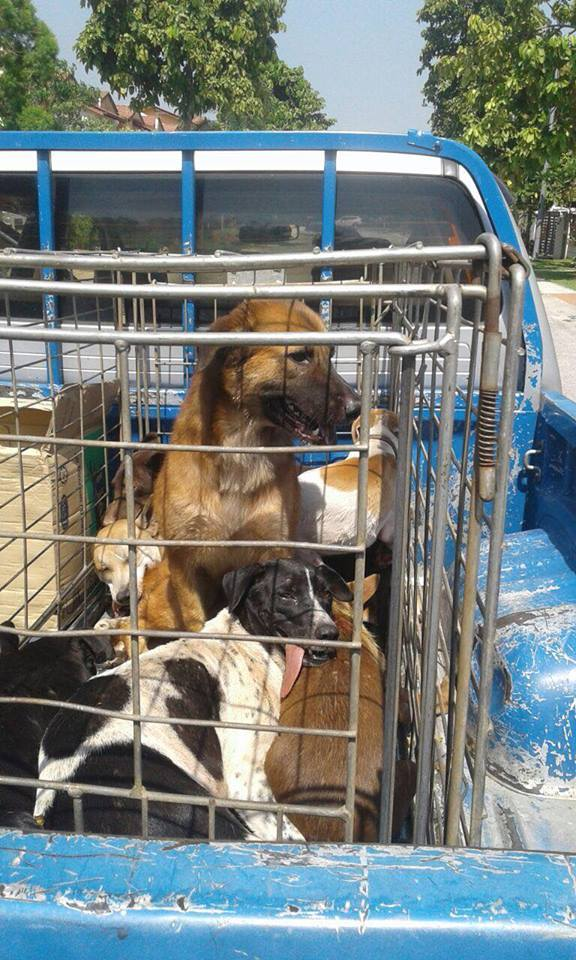 Image from Malaysia Independent Animal Rescue (MIAR)