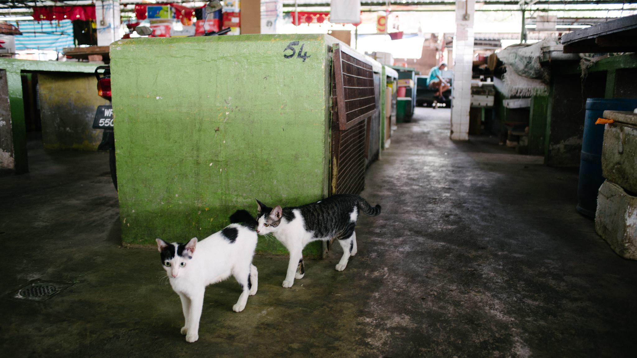 Image from SPCA Selangor