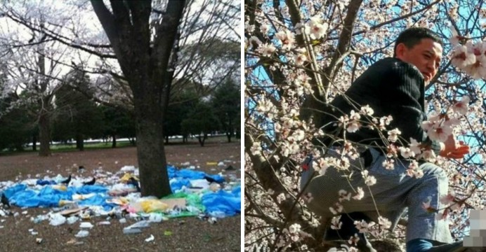 Some Chinese tourists climb up cherry blossom trees and leave their garbage in a park in Japan.