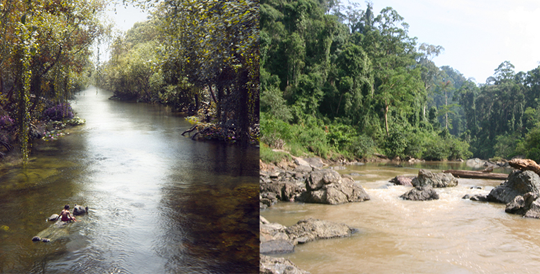 The scene where Mowgli and Baloo drift down the river (left) was inspired by Brownell's trekking expeditions in Sabah (right).