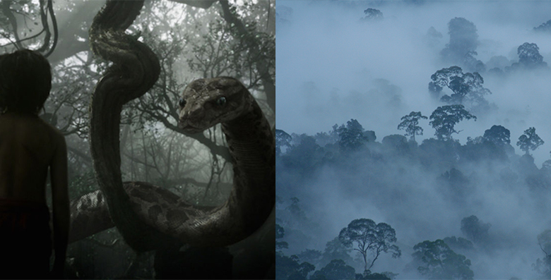 The misty, foggy forest where Mowgli encounters Kaa (left) bears a resemblance to a foggy day in Borneo forest (jungle).