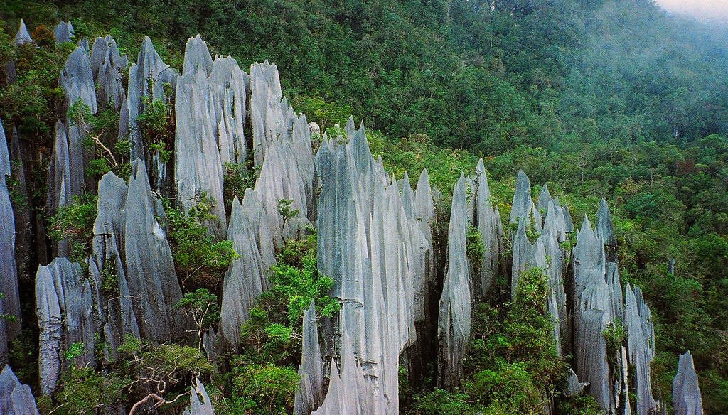 The limestone pinnacles of Gunung Mulu