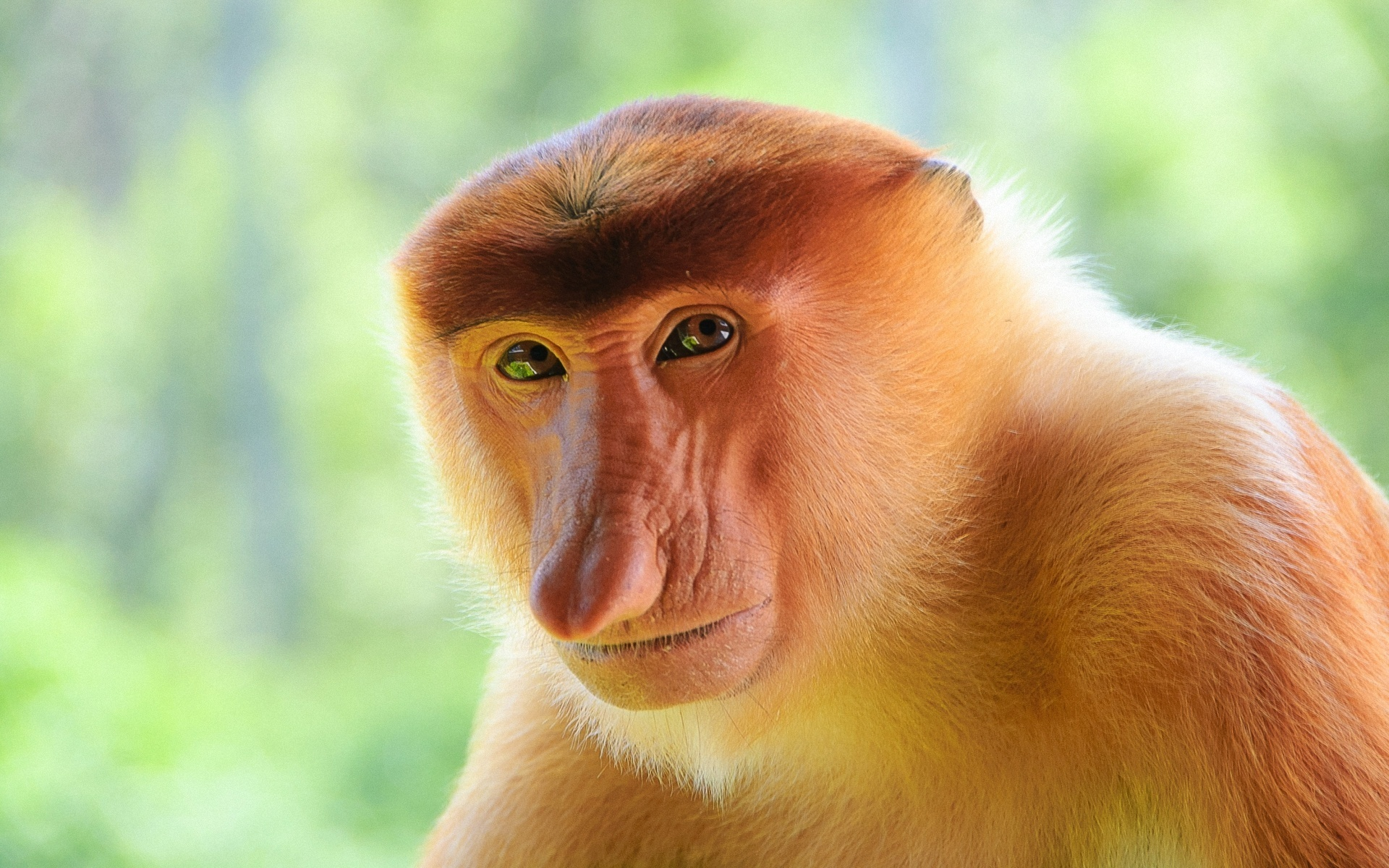 Borneo's endemic proboscis monkeys can be found at the Bako National Park