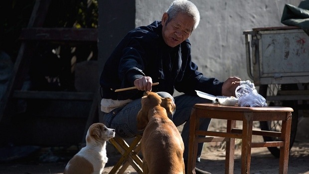 An elderly Chinese man feeds stray dogs as he has breakfast along a Hutong alley in Beijing.