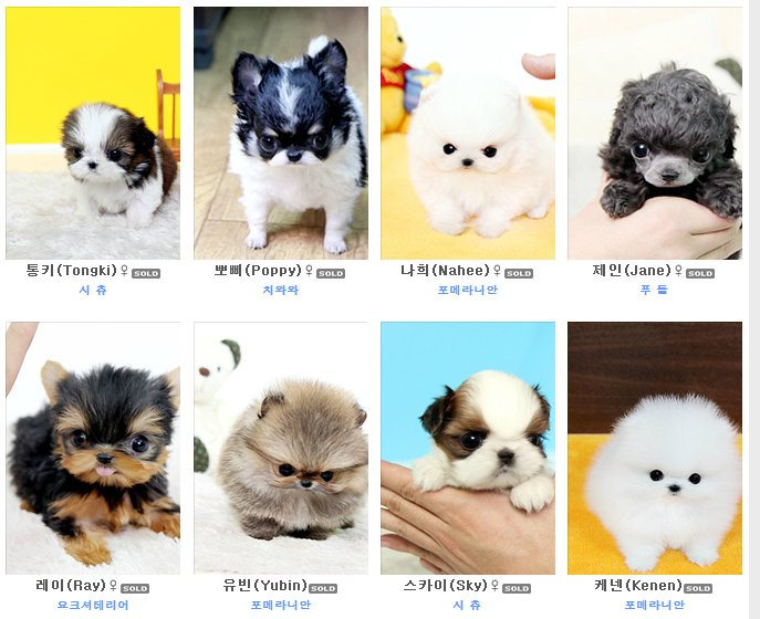 Teacup Puppies Are Cute, But Here's What You Don't Know