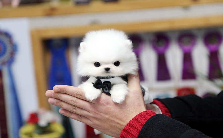 Japanese Dog Names – 100+ Awesome Names & Definitions