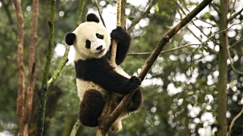 Image from MARTHA DE JONG-LANTINK/IUCN