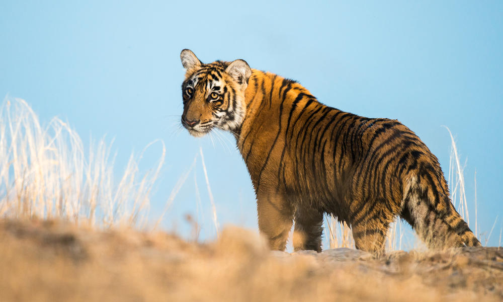 Image from WWF
